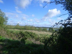 Hedgerows And Scrub -4