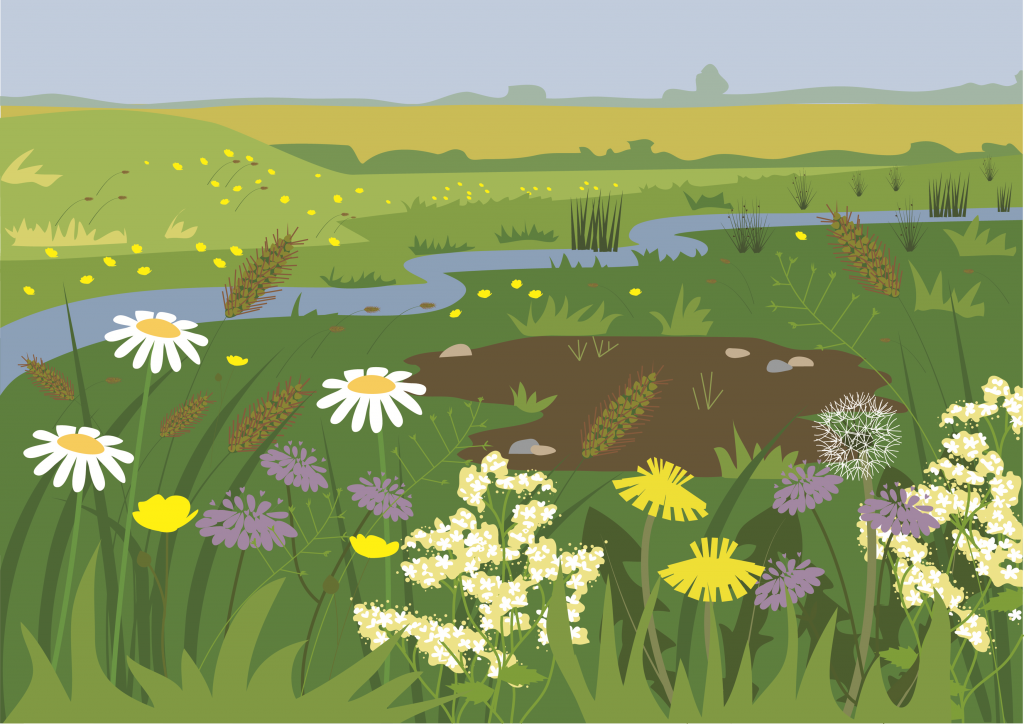 Grassland illustration by Butterfly Tracks Publications