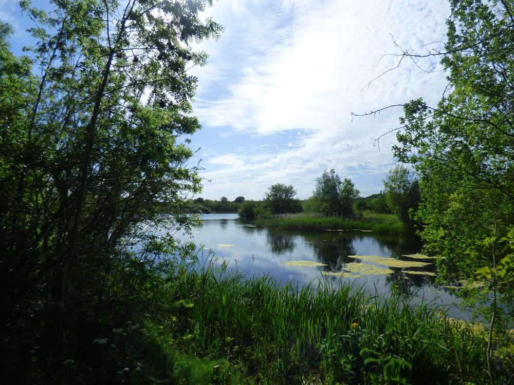 The Ring Res today