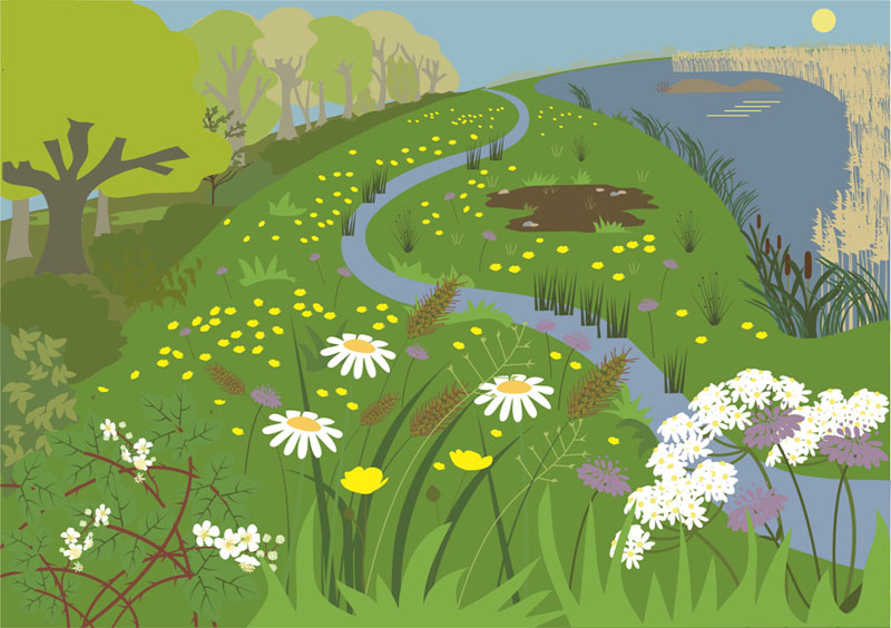 Reed beds illustration by Butterfly Tracks Publications